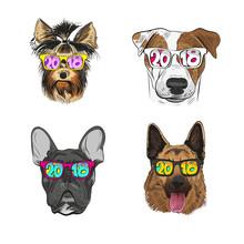 Dog Wearing Sunglasses, Year ...