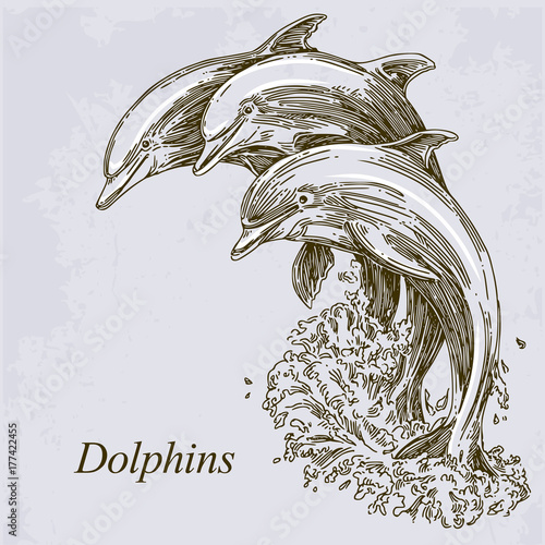 Fototapeta premium Grupa delfinów skaczących w wodzie. Ilustracji wektorowych.