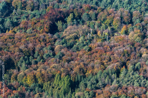 Fotografie, Obraz  Vue aérienne de la forêt de Fontainebleau à l'automne