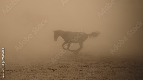 Canvas Prints Horses Horse running gallop in dust