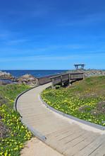 Walkway To A Gazebo At Asilomar State Beach In Pacific Grove, California