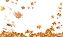 Falling Leaves In Autumn Backg...