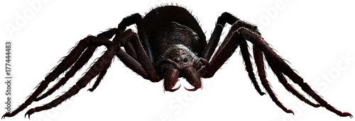 Photo Giant spider