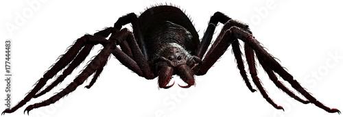 Fotografie, Tablou Giant spider