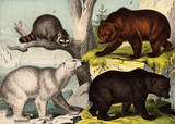 Bears in the wild. - 177446218