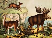 Animals In The Wild.