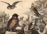 Różne gatunki ptaków na wolności. - 177447244