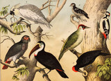 Different species of birds in the wild - 177447260