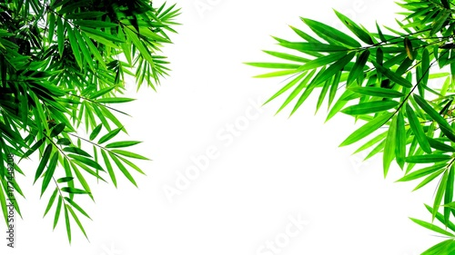 In de dag Bamboo green bamboo leaves isolated on white background