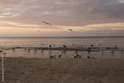 Foto op Aluminium Inspirerende boodschap beach and birds