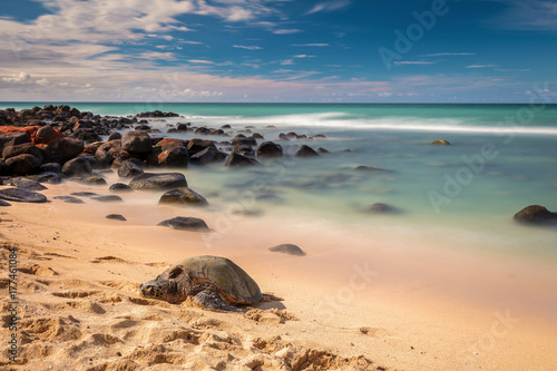 Honu Sleeping At Baby Beach Hawaiian Green Sea Turtles On The