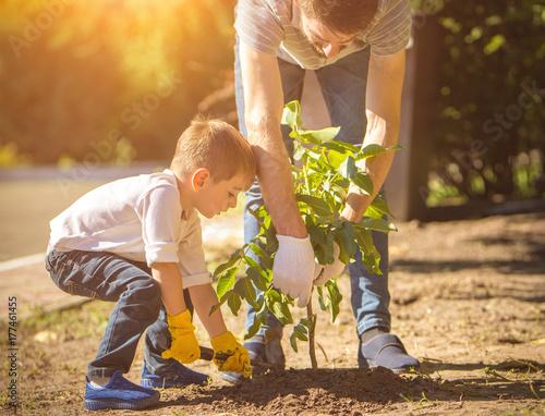 Carta da parati The father and a boy plant a tree