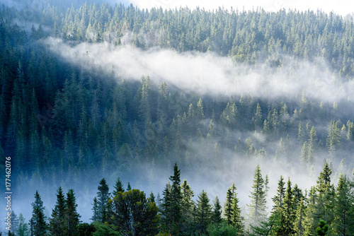 Zdjęcie XXL panoramiczny widok na góry w mglistym lesie