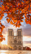 Notre Dame cathedral with autumn leaves in Paris, France