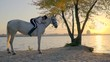 A slender woman sits on white horse, smoothes his neck, filming by the river at sunset time