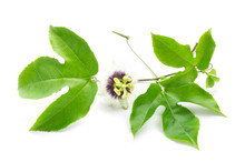 Green Leaves And Brace Of Passion Fruit With Flower On White Background