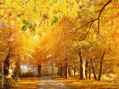 Canvas Prints Autumn Sunset in autumn park. Autumn colors.