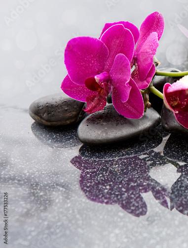 tlo-z-rozowa-orchidea-i-kamieniem