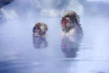 地獄谷野猿公苑の温泉...