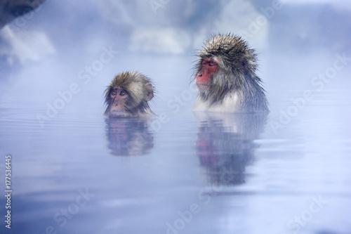 In de dag Aap 地獄谷野猿公苑の温泉と猿