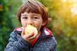 canvas print picture - Kleiner Junge Kind Apfel Obst Früchte essen draußen Herbst Natur gesunde Ernährung
