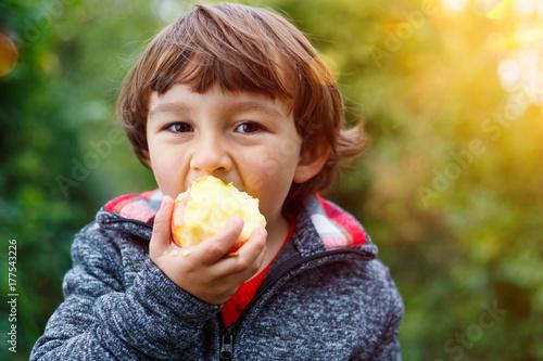 Fotografie, Obraz  Kleiner Junge Kind Apfel Obst Früchte essen draußen Herbst Natur gesunde Ernähru