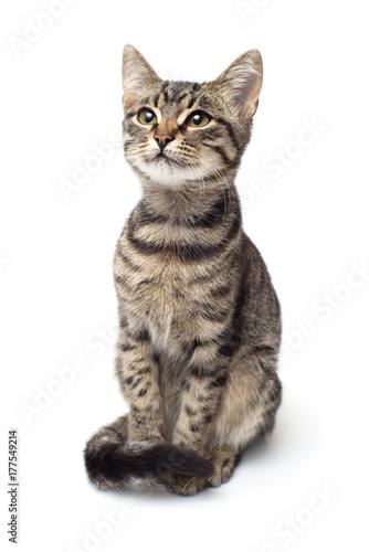 Fotografía  Beautiful striped kitten of gray isolated on white background