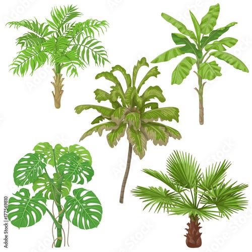 rosliny-tropikalne-na-bialym-tle