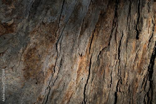 Valokuva  textura de un árbol a la sombra