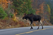 Wildlife Algonquin Provincial Park