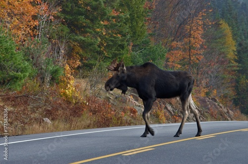 Photo Wildlife Algonquin Provincial Park