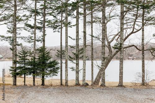 Pine trees along the lake near Shiraoi Ainu Village Museum in Hokkaido, Japan Wallpaper Mural