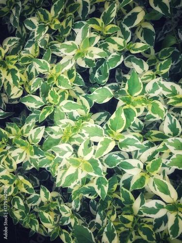 zielony-urlop-jako-tekstura-tlo