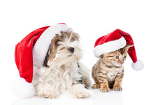 Bengal Cat And Biewer-Yorkshire Terrier Puppy In Red Christmas Hat. Isolated On White Background