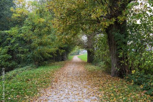 Fototapeta polnej drodze pokryte jesiennych liści w środku roślin