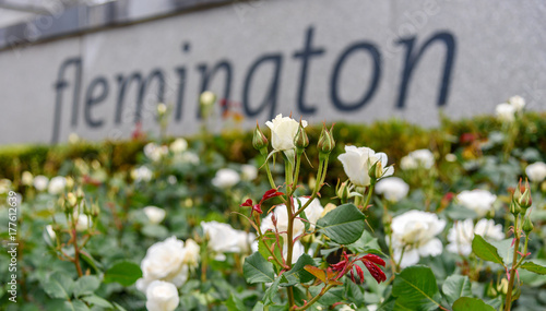 A white rose in front of the Flemington Racecourse entry sign in Melbourne, Victoria, Australia.