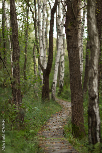 Tuinposter Weg in bos polesie