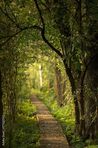 Foto op Canvas Weg in bos polesie