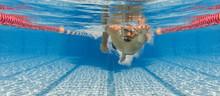 Freistil Kraulen Schwimmen Unt...