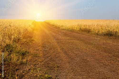 Foto op Plexiglas Blauwe hemel Ripe rye on an agricultural field