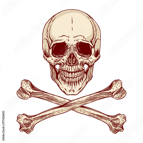 Photo  human skull and crossbones