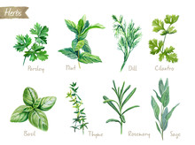 Culinary Herbs Collection Wate...