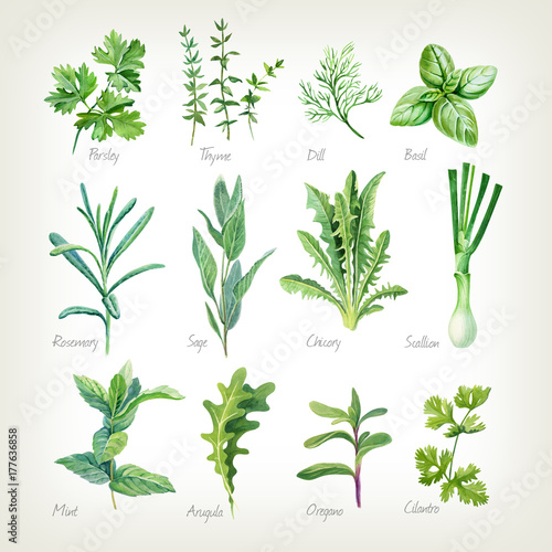 Poster Condiments Culinary herbs collection watercolor illustration with clipping paths