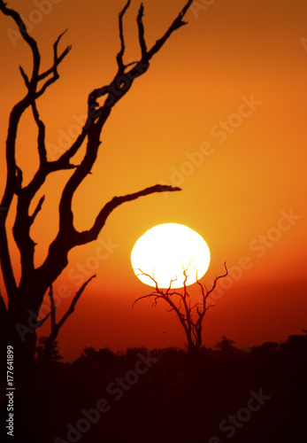 Autocollant pour porte Orange eclat African sunset with a tree silhouette and large orange sun