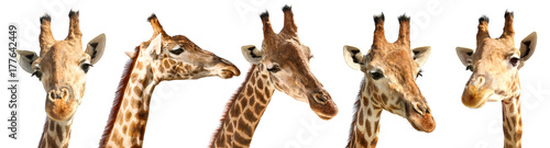 Deurstickers Giraffe Collage of cute giraffes on white background