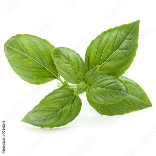 Stampe  Close up studio shot of fresh green basil herb leaves isolated on white background