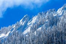 Snowy Trees McClellan Butte Sn...