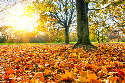 Fotoposter Oranje eclat Sunny autumn landscape with golden maple trees in the park