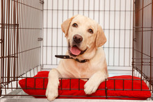 Dog In Cage. Isolated Backgrou...