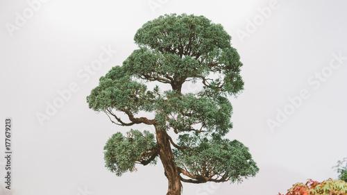Fotobehang Bonsai bonsai trees aligned in a row - selective focus close-up. Japanese art of bonsai